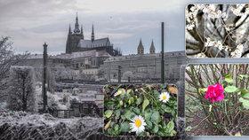 Jaro přišlo do Prahy už v lednu! V metropoli kvetou rostliny, jako by se nechumelilo