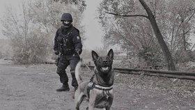 Policejní psi v akci: Zlodějíčci chtěli vykrást sklepy, Connor je našel během deseti vteřin