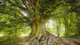 Namalujte strom! Co všechno se z něj dozvíte o své povaze a emocích?