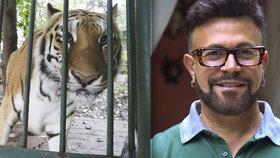 Smrt Laffitova tygra řeší ochránci zvířat. Co se jim na skonu zvířete nezdá?