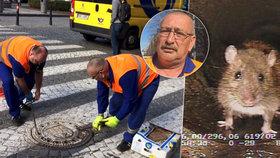 """Praha proti potkanům: """"Kolegu jeden kousl, dostával denně osm injekcí do břicha,"""" říká deratizátor"""