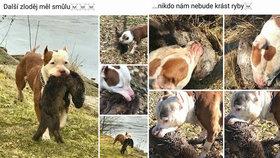 Další zloděj měl smůlu: Podnikatel se chlubil fotkami psa s vydrou v zubech, vyšetřuje ho policie