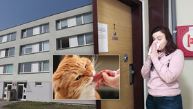Kočičí zápach terorizuje obyvatele pražského paneláku. V bytě o velikosti 80 m2 žije 60 zvířat