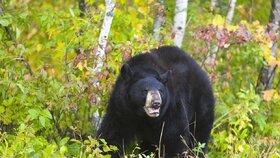 Catherine (†62) rozsápal v Ontariu černý medvěd.  Šokovaní místní: První útok za 11 let