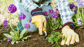 Jak se zbavit plevele levně a bez chemie? Vyzkoušejte ocet nebo páru!