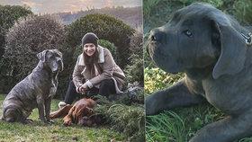 Anna K. našla novou lásku! Pořídila si klon pejska, který jí nedávno zemřel