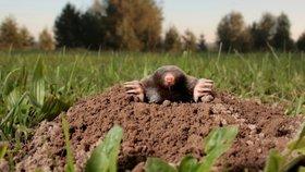 Nejlepší tipy, jak šetrně vyhnat krtka ze zahrady