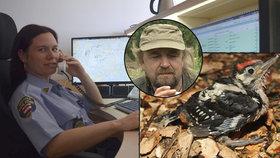 """V Brně mluví ptáci s lidmi: Dejte mi toho strakapouda k telefonu! Ornitolog rozluštil, co mládě """"říkalo"""""""