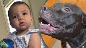 Tragická smrt malé Lilianky! Devítiměsíční miminko se stalo obětí pitbula