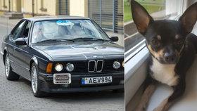 Dvojice z BMW unesla čivavu! Omráčené zvíře strčili do igelitky