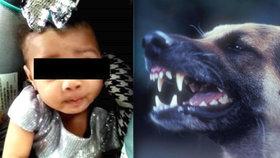Pětiměsíční holčičku zakousl německý ovčák. Bezbranné dítě napadl ve spánku