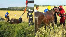 Kůň na Brněnsku uvízl v bahně: Hasiči ho museli vyprostit jeřábem