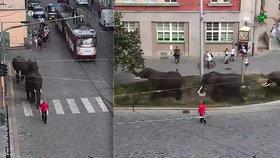Po Olomouci se procházeli sloni: Reklama na cirkus naštvala ochránce zvířat