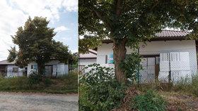 Stavba rodinného domu v pražské Dubči vyvolává emoce: Vjezd do garáže přes lípu?