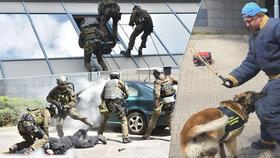 Slaňují při zadržování dealerů, používají psy: Celníci nejsou žádná ořezávátka!