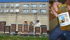 Vězni stáčí Bručouna! Do převýchovy odsouzených zapojili včely, med je ale  neprodejný