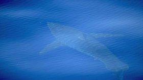 Panika v dovolenkovém ráji Čechů: U břehu se objevil obří lidožravý žralok