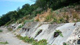 Místo odpadků květiny a stromy. Chuchelská skládka mizí: Do konce jara ji obsype 15 tisíc dřevin