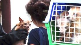 """""""Chovatelka"""" měla v paneláku 60 zbídačených psů: Den před tím jí zabavili dalších 20 zvířat"""