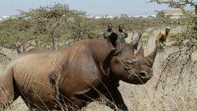 Ženy v Africe zachraňují nosorožce. Se zbraní v ruce v protipytlácké jednotce