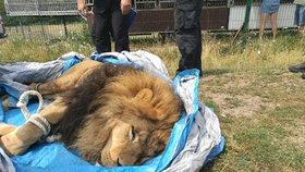 Ze soukromé zoo na Hradecku utekli dva tygři a lev: Majitel dostal pokutu
