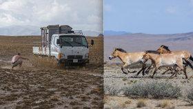 """EXKLUZIVNÍ FOTO: Překážky """"pražských"""" koní Převalského v Mongolsku? Kamiony s uhlím i bahno"""