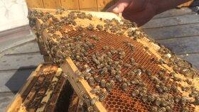 Dvacet úlů a tisíce včel v tahu: Mlsný zloděj ukradl medonosky za 100 tisíc
