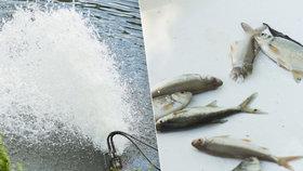 Úhyn ryb pokračuje. V Čimickém rybníku se udusily stovky ryb, pomoci má čerpadlo