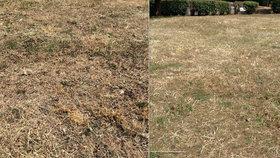 """Proč se seče tráva, když jsou extrémní horka? Sálající slunce nízký porost """"dodělá"""""""