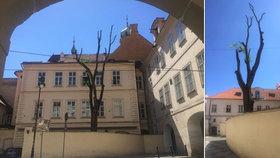 """Kauza """"zprzněného"""" stromu v Praze: Prořezat se měly jen větve směrem do ulice"""