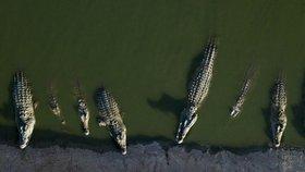 Krokodýlí farma zkrachovala. Podnikatel opustil stovky zvířat, můžou utéct a útočit