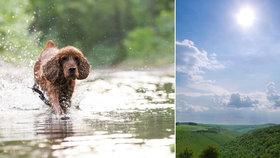 Horko může domácího mazlíčka zabít už za 6 minut! Podívejte se, co v létě nikdy nedělat!