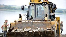 Horší, než se čekalo: V rybníku Nesyt uhynulo přes 100 tun ryb. Škoda jde do milionů