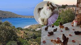 Práce snů pro milovníky zvířat: V Řecku hledají někoho, kdo se postará o 55 koček!