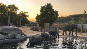 Pražská zoo bude mít nové velkokapacitní toalety: Fasádu ozdobí zkamenělý trus