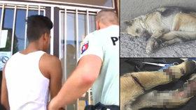 Policisté pustili podezřelého z týrání fenky: Veřejnost svolává lynč