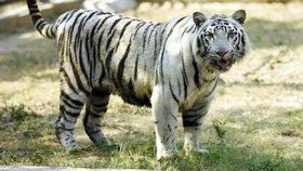 Zoo pořídila klece pro lidi. Aby se mohli schovat, když začnou útočit zvířata