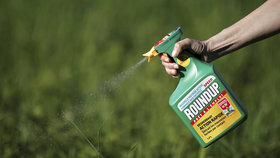 Na plevel šetrněji: Albert skončil s pesticidem Roundup, Globus čeká na náhradu