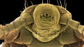 """S koronavirem """"zatočí"""" lék na parazity? Naděje už dříve vzbudil proti viru Zika"""