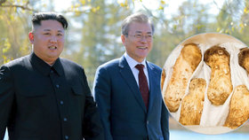Kim poslal jižním sousedům vzácné houby. Dostanou je rodiny s příbuznými v KLDR
