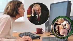 Zákaz houbaření i Zemanovo zdraví: Seniory straší falešné zprávy, jak nenaletět?
