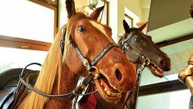Koně z Letenského kolotoče jsou »po plastice«: Přes 100 let by jim nikdo netipoval!