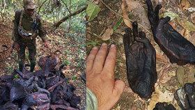 Příšerný nález: Strážci parku objevili v jámě desítky vyuzených zvířat!