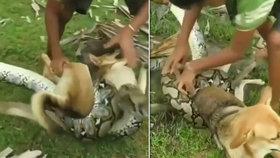 Děti zahnaly obrovského hada, který jim chtěl sežrat psa: Tohle video musíte vidět!
