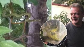 Šokující nález na zahradě: David popsal, jak se ženou našli jedovatou mambu