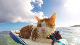 Tomu neuvěříte! Jednooká kočka sjíždí vlny na surfu, zná ji celý svět
