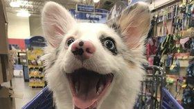 Milujeme, když dělají obličeje! Tyhle fotky zvířátek zaručeně zlepší váš den