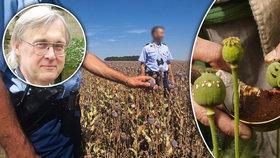 Maková turistika: Cizinci kosí pole v Česku zbytečně. Opia je v našem máku málo, říká expert