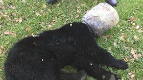 Medvídě si zaseklo hlavu v plastovém kbelíku. Záchrana trvala tři dny