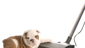 Bojujete doma se zvířecími chlupy? Pomůže vysavač i kvalitní strava